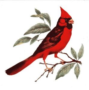 Moms Cardinal Tile