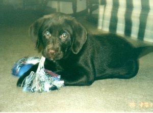 Isaac Puppy020